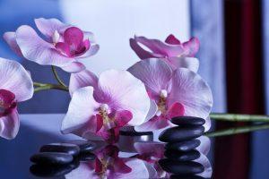 dans le bien être les massages volupté des sens